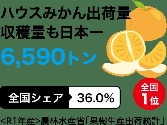 ハウスみかん出荷量 収穫量も日本一